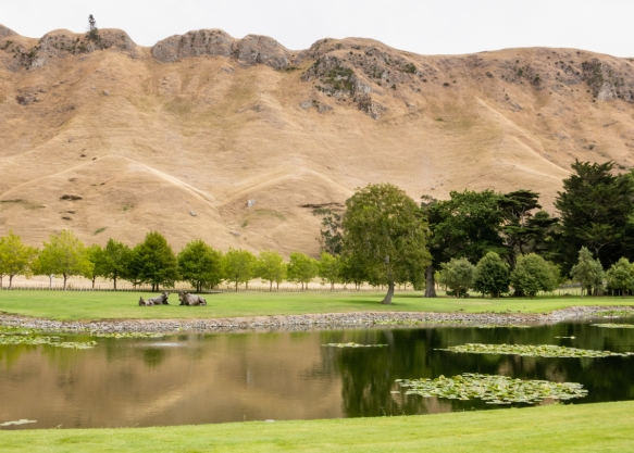 looking-out-from-the-craggy-range-winery-tasting-room-and-terro%cc%82ir-restaurant-to-the-spectacular-te-mata-peak-in-the-premium-growing-area-of-hawkes-bay-havelock-north-new-zealand
