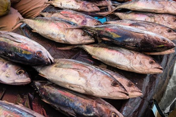 Freshly caught small big-eye tuna, Central Market, Honiara, Guadalcanal, Solomon Islands