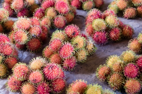 Rambutans are a fruit native to many of the Pacific Is and Southeast Asia, Central Market, Honiara, Guadalcanal, Solomon Is; when the hairy red shell is cut open and removed, the inside