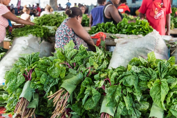"We bought some ""slippery cabbage"" with red stems at the Central Market, Honiara, Guadalcanal, Solomon Islands; on the advice of a Melanesian member of our expedition team, in our kit"
