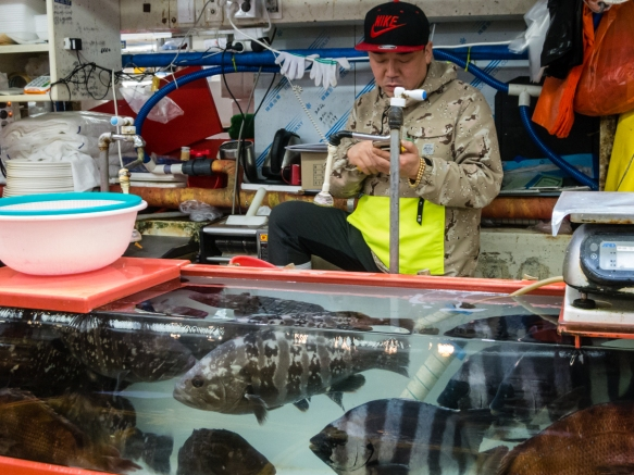 A few of the vendors had huge fish tanks with interesting specimens for sale, Jagalchi Fish Market, Busan, South Korea