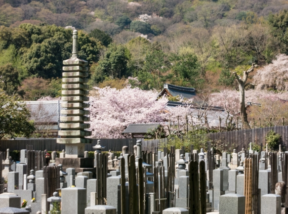 Before entering the Bamboo Garden in the Arashiyama District of Kyoto, Japan, we passed a cemetery and a temple that was mostly hidden by beautiful Sakura (Cherry Blossoms)
