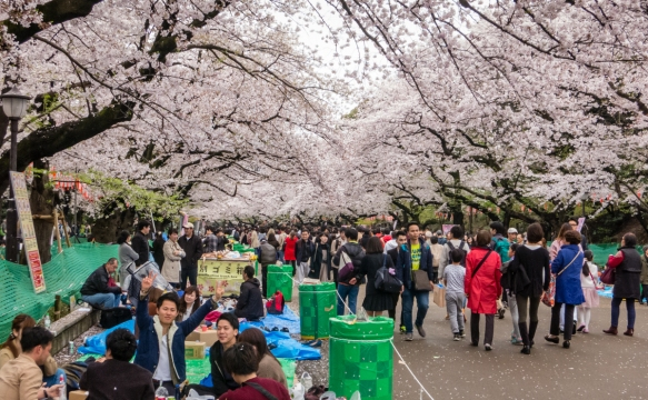 Groups gathered for picnic suppers under the Sakura (Cherry Blossoms) at Ueno Park in the Uenokoen district, Tokyo, Japan