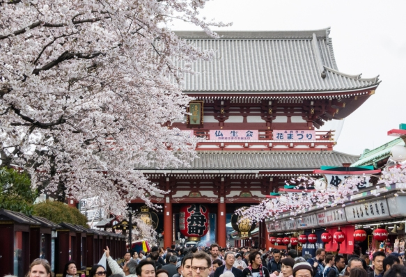 Nakamise Street, lined with small souvenir and snack shops -- full of Sakura (Cherry Blossoms) -- leads to the second gate and the temple grounds at Senso-ji Temple (Buddhist), Tokyo, Ja