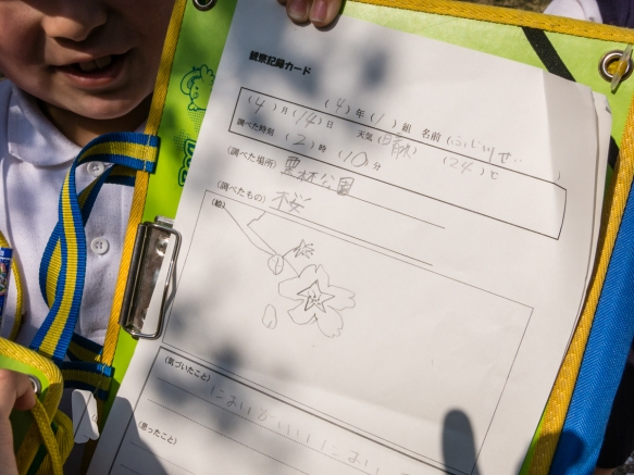 One of the school children proudly let me photograph the initial part of his pencil sketch of Sakura, Ritsurin Garden, Takamatsu, Kagawa, Japan