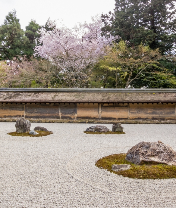 Sakura (Cherry Blossom) season is a special time of the year to visit the Rock Garden of Ryoanji Temple, Kyoto, Japan
