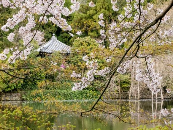 The garden of Ryoanji Temple, Kyoto, Japan