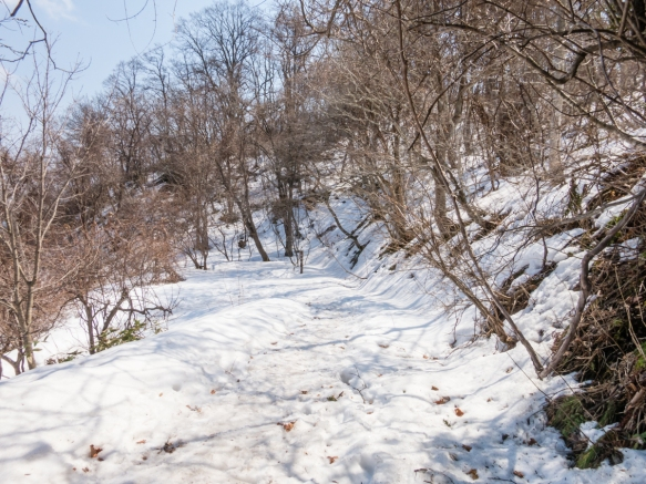 The trail up Mt. Hakadote (1,096 feet - 334 meters high) in early April was covered with snow on the third of the trail that was shaded, Hakodate, Hokkaido Island, Japan