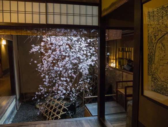 Visiting during the heart of the Sakura (Cherry Blossom) season, the center of Tawaraya Ryokan, Kyoto, Japan, contains an outdoor cherry tree that was in full bloom, providing a calming