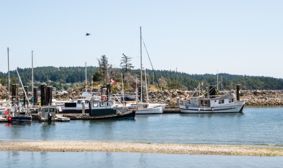 A small harbor behind the Saturday market in Ganges Village, Salt Spring Island, British Columbia, Canada