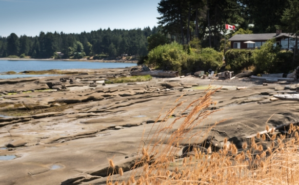A small patch of wild grass was blowing in the ocean winds on the Malaspina Galleries with an ocean front home visible in the distance, Gabriola Island, British Columbia, Canada, British
