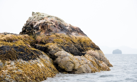 Late afternoon Zodiac cruise around New Eddystone, Misty Fjords, Ketchikan, Alaska, USA, #4