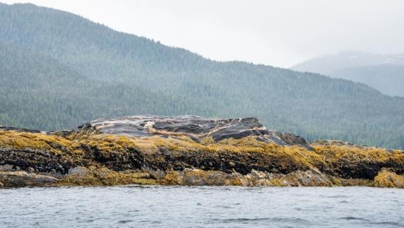 Late afternoon Zodiac cruise around New Eddystone, Misty Fjords, Ketchikan, Alaska, USA, #6