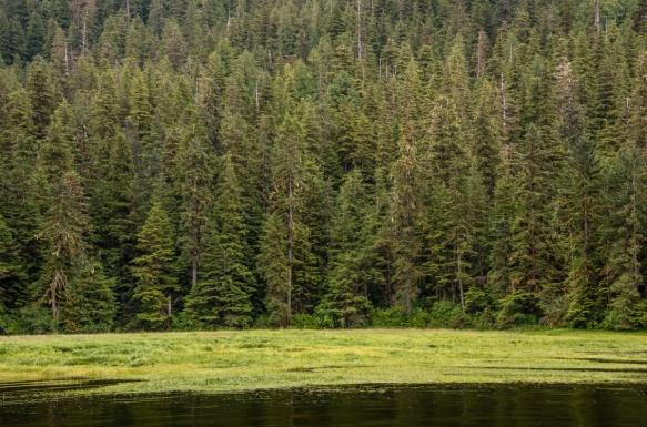 Mid-day Zodiac cruise around Smeaton Bay, Misty Fjords, Ketchikan, Alaska, USA, #3