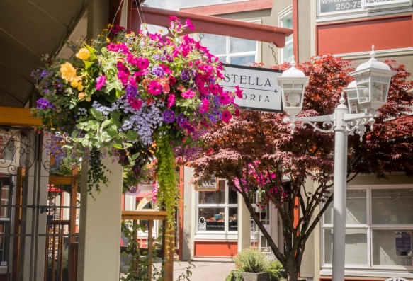 Nanaimo, like Victoria, has many beautiful hanging baskets full of colorful flowers along the city_s shopping streets, Vancouver Island, British Columbia, Canada