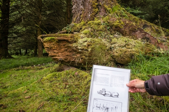 A lichen and moss-covered, decayed Wolf Horizontal Memorial with a sketch of what the original carving looked like before it began decaying, K_uuna Llnagaay (Skedans), Queen Charlotte