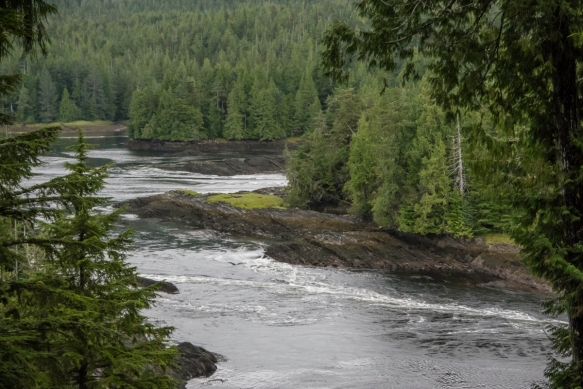 Butze (Reversing Tidal) Rapids are a natural feature caused by the ebb and flow of the tide through Fern Passage around Kaien Island, Butze Rapids Interpretative Trail, Prince Rupert, Br