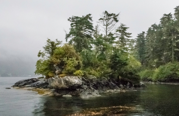 On the way back from whale watching in Sitka Sound to Sitka, we stopped by this small rock, adjacent to a small island, to spot an American bald eagle (at the top of the larger tree, cen