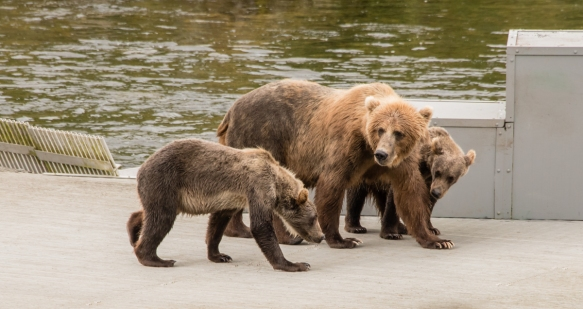 The family taking a break from fishing and dining, Frazer Lake, Kodiak Island, Alaska USA