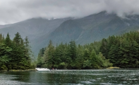 The salmon were returning up river at this end of Deep Inlet off the Eastern Channel of Sitka Sound, Alaska, USA; this was after we saw a number of harbor seals in the inlet cavorting on