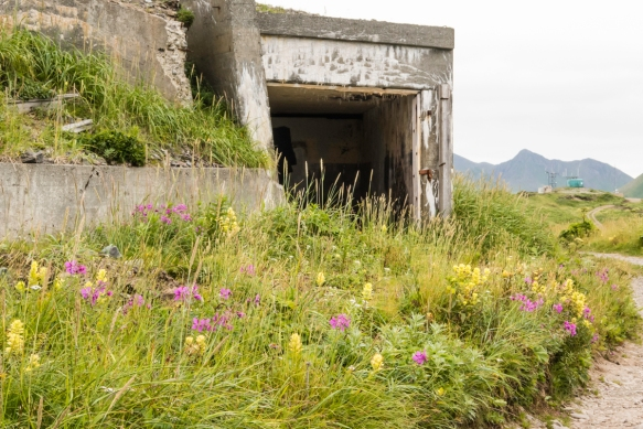 Wildflowers in front of the entrance to the magazine complex of Battery 402 – the large concrete structure (with a sod over the roof) held the ammunition needed for immediate response
