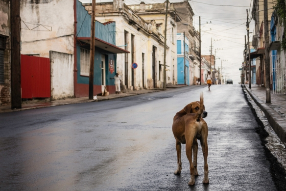Stray dogs are to be found all around the cities, fed by the local residents – this one was keeping watch over a neighborhood street at dusk, Cienfuegos, Cuba