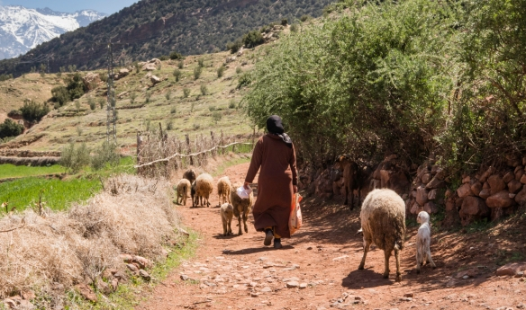 Everyone in the Berber village that we visited were farmers (the men), while many women tended flocks of sheep and goats, Asni, High Atlas Mountains, Morocco