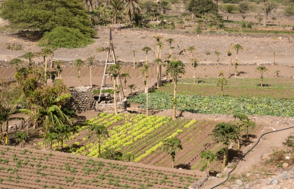 Local farmers have to dig wells over 300 meters (nearly 1,000 feet) deep to get water for their small plots (pictured are plots belonging to several families), São Vicente, Cape Verde