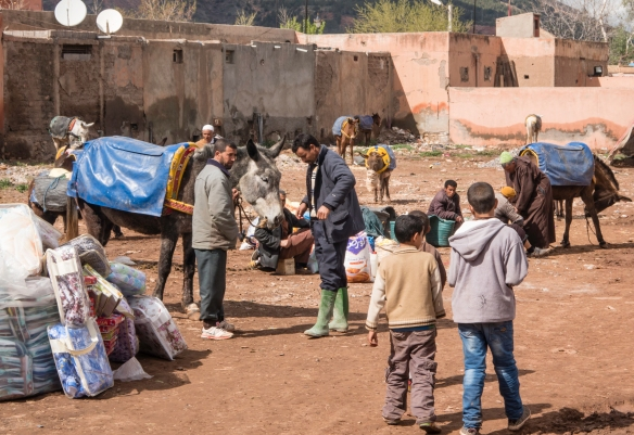 The mule parking lot – many of the vendors bring their goods by mule to the market (in a rotating city each day of the week), Weekly Berber Market in Asni, High Atlas Mountains, Morocc
