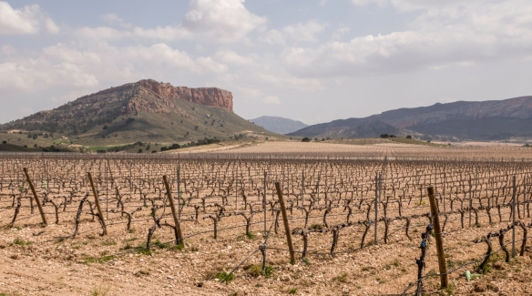 Vineyards of the Juan Gil winery, Juan Gil Bodegas Familiares (Gil Family Estates), Jumilla, Spain