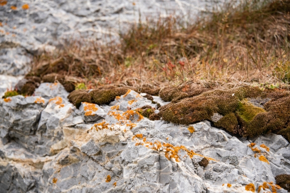 Gnålodden, Hornsund Fjord, Spitsbergen Island, Svalbard, photograph #7 – this small deposit of soil on a shore rock gave life to a wide variety of plants