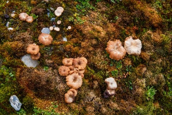 Gnålodden, Hornsund Fjord, Spitsbergen Island, Svalbard, photograph #8 – tiny mushrooms were a rarity in the tundra