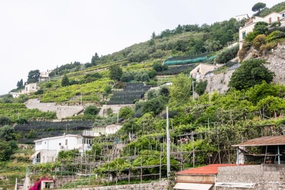 Hiking the Amalfi Coast, Italy, #5 – lemon groves terraced on the steep hillside of the coast east of the village of Amalfi