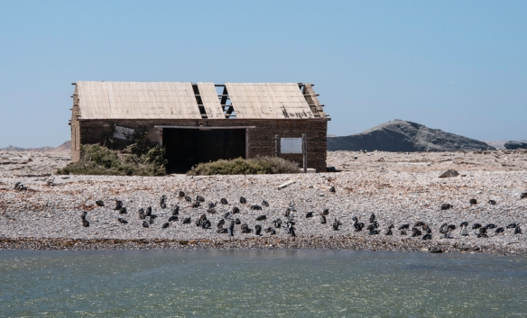 At one point the penguin guano (droppings) was collected on Halifax Island – the ruins were the home for the isolated workers, Lüderitz, Namibia