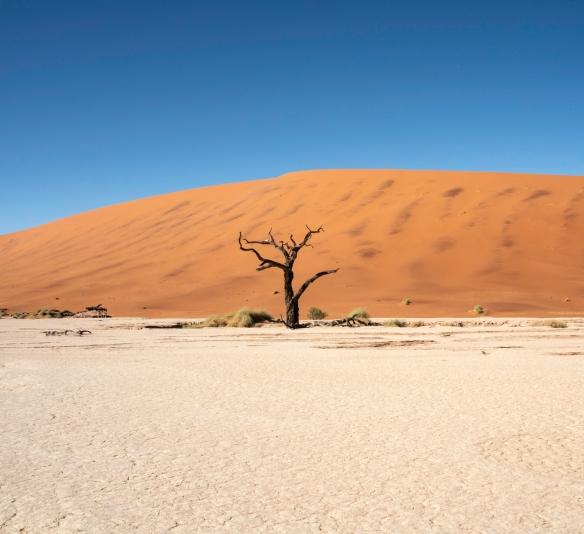 Deadvlei, Namibia, #10