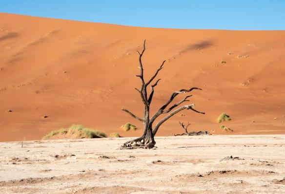 Deadvlei, Namibia, #3