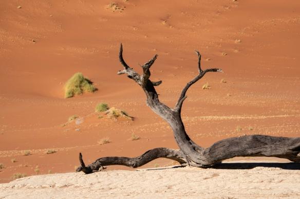 Deadvlei, Namibia, #5