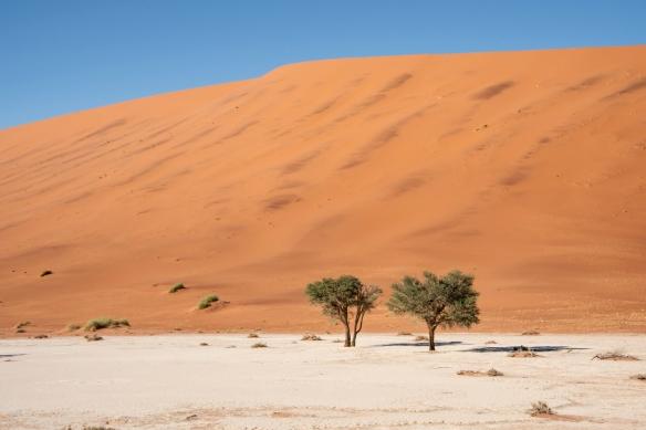Deadvlei, Namibia, #7
