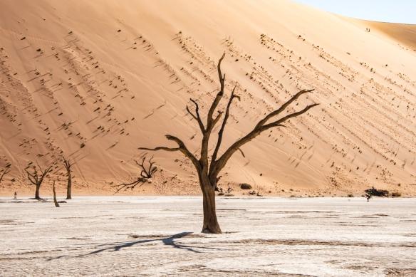 Deadvlei, Namibia, #8