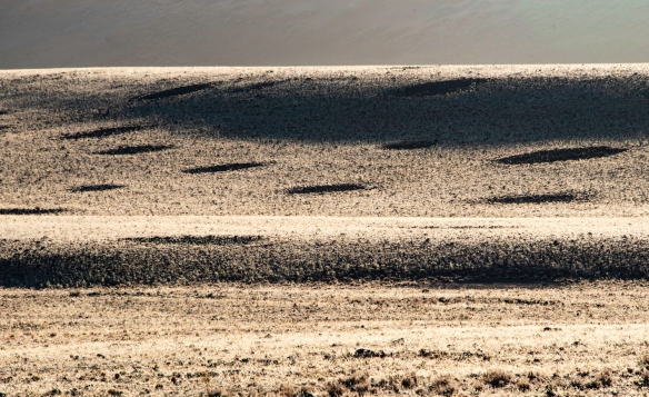 Fairy circles in the Namib Desert are circular patches of land barren of plants, varying between 2-15 meters (7-49 feet) in diameter, often encircled by a ring of stimulated growth of gr