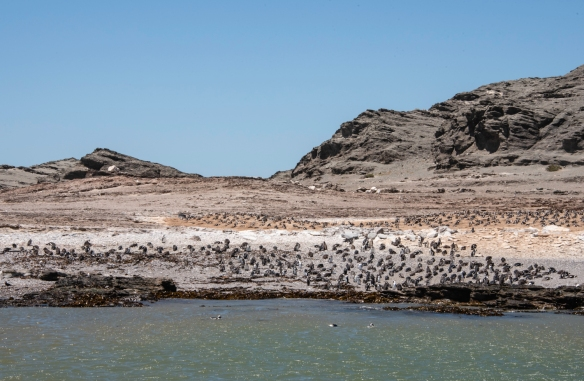 Halifax Island, part of a group of 20 or so islets known collectively as the Penguin Islands, is about a 45-minute catamaran cruise from Lüderitz, Namibia