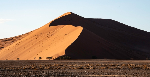 Sand Dunes at Sunrise, Sossusvlei, Namibia, #3 -- dune grasses highlighted by the early morning sunlight