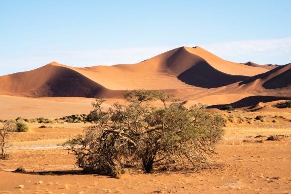 Sand Dunes at Sunrise, Sossusvlei, Namibia, #8