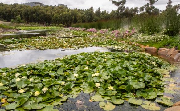 The gardens at DeMorgenzon were stunning, Stellenbosch, South Africa