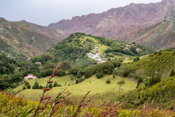 The landscape of Saint Helena Island is quite varied, from the arid and rocky cliffs above the Atlantic Ocean to the fertile interior valleys where New Zealand flax plants (pictured in t