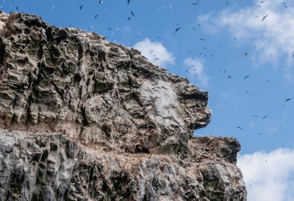 Hundreds of birds flying over Boatswain Island, Ascension Island