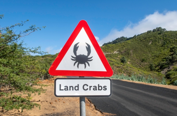 Land crabs are Ascension Island_s only large, native land animal and are one of the island_s most iconic inhabitants; they only live on four, small South Atlantic islands and are omn