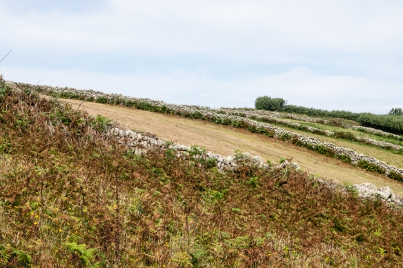 Due to the high winds on St. Mary's Island, farming plots are fenced in by stone walls, Isles of Scilly, England