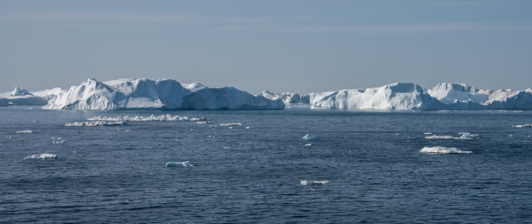 Our ship sailed into Ilulissat, Greenland, across Disko Bay; this area is rich in marine life and there are many icebergs that originate from Sermeq Kujalleq, the most productive glacier in the northern hemisphere