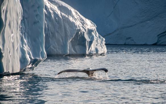 The Ilulissat Icefjord, Ilulissat, Greenland #16